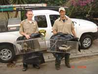 Animal Capture And Removal: Jeremy with Mike Rowe from Dirty Jobs.