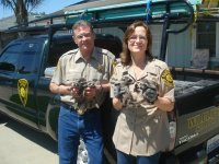 Animal Capture And Removal: Ron and Becky Bailey with Baby Raccoons.